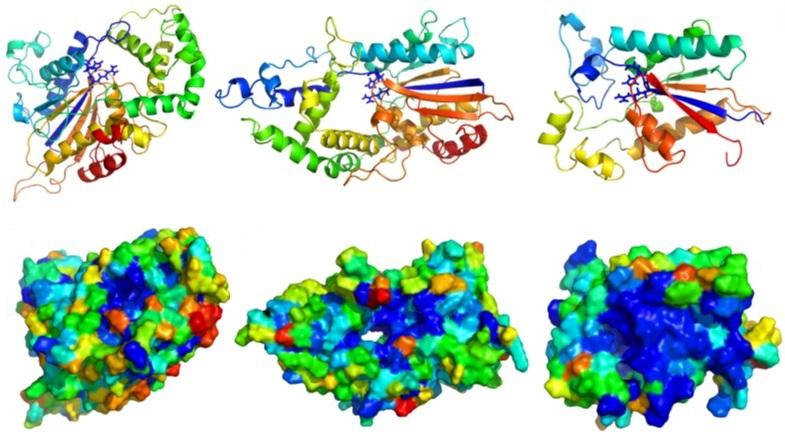 Histidine Phosphatase Models
